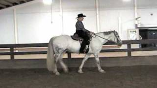 Professional evaluation of MS827 from Maya Saddles. Jenna (the test...