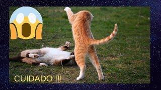#CatsGatos ENGRAÇADOS  2019!