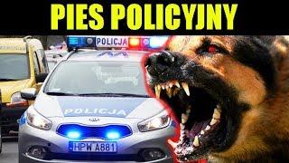 POGRYZŁ mnie PIES ANTYTERRORYSTÓW i POLICJI