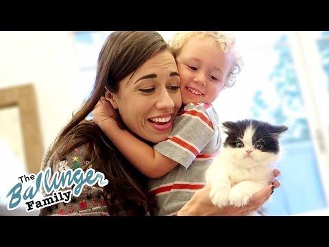 Meeting Colleen's New Kitten