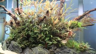 TWINSTAR Nano Plus - Acuário plantado sin algas [ES]