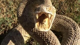 Snake Scare 2-Art bindery...the Return Of Robbie