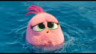 angry Birds 2 Hatchlings Cute Scenes