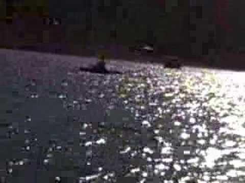 Fly fishing at panguitch lake utah youtube for Panguitch lake fishing report