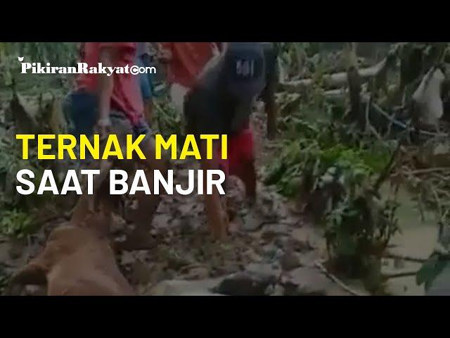 Puluhan Ternak Mati Terbawa Arus Air saat Banjir di Kabupaten Kebumen