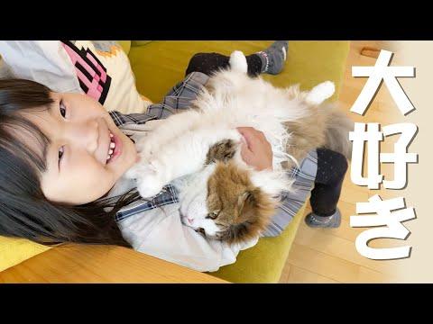 【癒し】娘の抱っこが大好きでされるがままに寝てしまうもふ猫