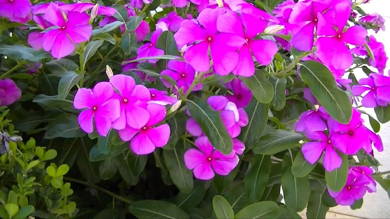 Uma Flor De Bom Dia: Boa Noite