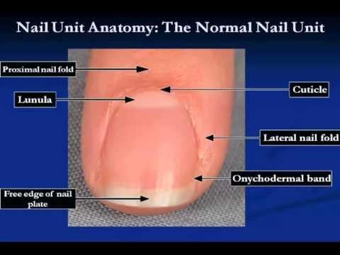 All About Pachyonychia Congenita Nails by Dr. Adam Rubin