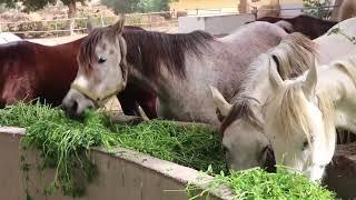 """محطة الزهراء للخيول العربية الأصيلة """" طلاب إعلام القاهرة """""""