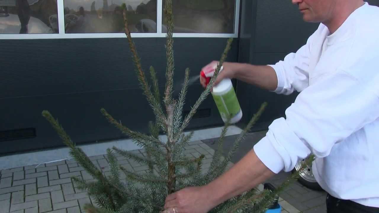 Brandveilige Kerstbomen Doe Het Zelf Met Onze Spray