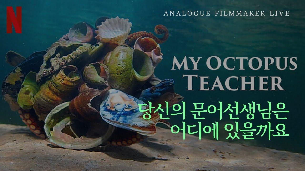 "[LIVE! ] 영상제작자의 ""나의 문어 선생님(My Octopus Teacher) 리뷰""   우리가 사소한 일에 목숨을 거는 이유"
