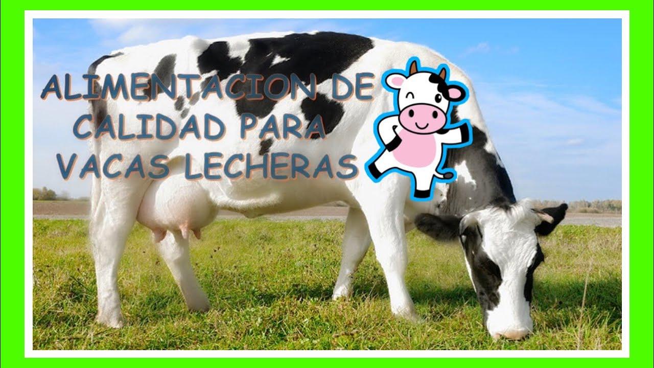 Vacs And Videos >> 007 ALIMENTACION CORRECTA PARA GANADO LECHERO - YouTube