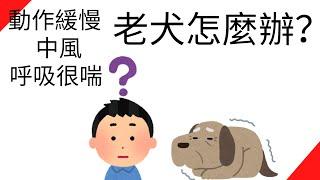 老犬關節不好、中風(?)、呼吸很喘怎麼辦?【我該怎麼辦?第2集】