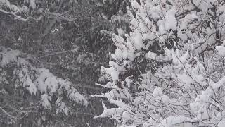 2hrs of Snow Falling with Relaxing Music - Relaxation,Meditation,Sleep,Study,Insomnia