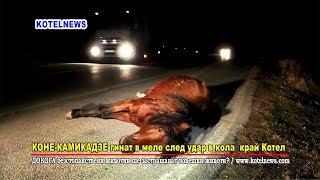Кон на кайма в тежко ПТП край Котел www.kotelnews.com