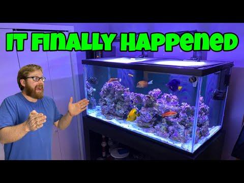 QUARANTINE IS OVER!!!!  New Colorful Saltwater Fish Moving To Reef Aquarium