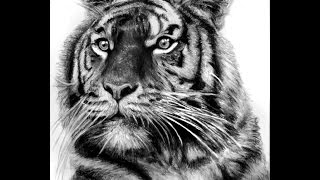 Tattoo designs, sketches & ideas - tiger tattoos