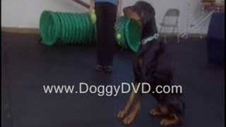 Dog Training - Train Your Puppy To Sit, Stay, Come & More.