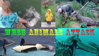 When Animals Attack Compilation 2017,  Dangerous, Crazy and Funny Video Clips
