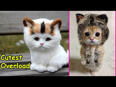 Cutest Overload Kittens ! 😻 Too Cute Too Funny Cats - Pets Story Video 2020