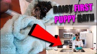 daisy-s-first-puppy-bath-so-adorable