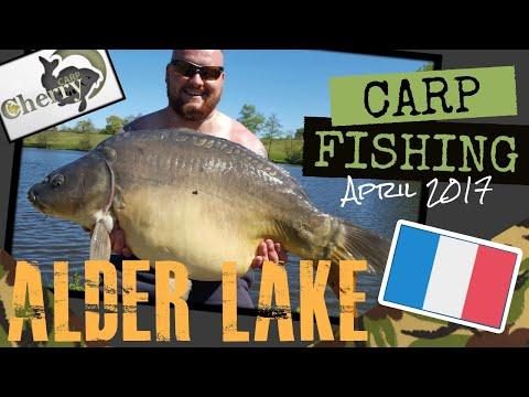 Carp Fishing @ Alder Lake 2017