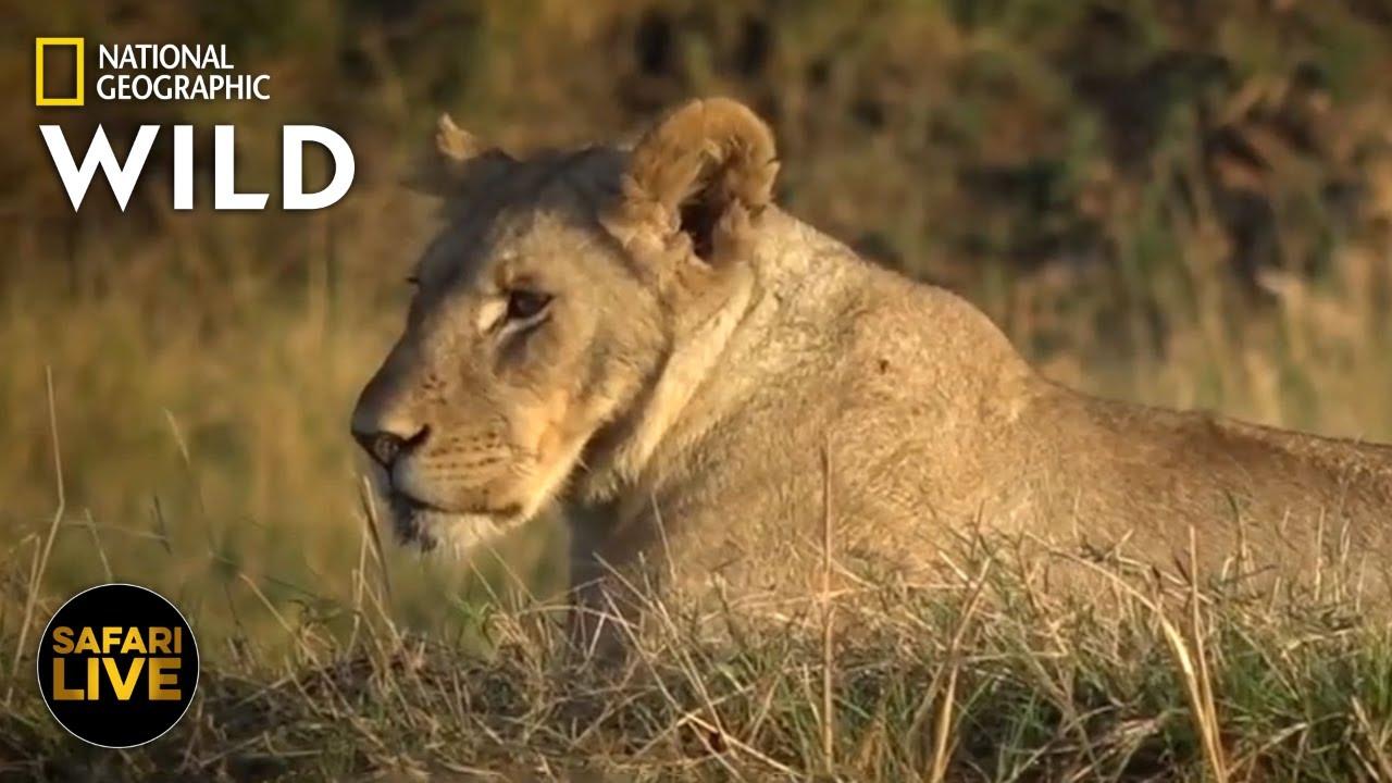 Safari Live - Day 273 | Nat Geo Wild