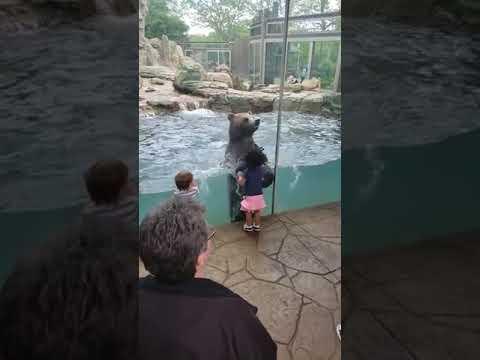 Bear at Zoo Imitates Little Girl Jumping