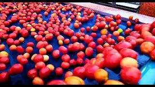 АПК Астраханский. Замкнутый цикл производства томатной пасты (концентрат)