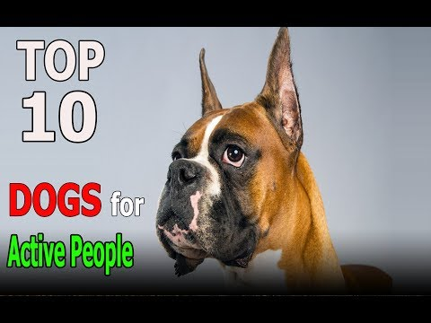 Top 10 Dog Breeds For Active People | Top 10 animals