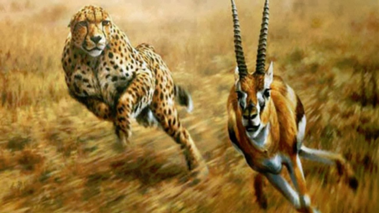 predator prey Using tools, language, and agriculture, early humans gradually found ways to overcome several key natural checks and balances with our weapons we could kill off our predators, like lions and tigers.