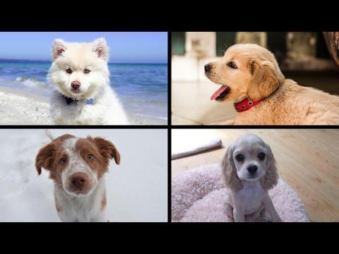 Slideshow of 25 adorable Dog Puppies (Cagnolini) Jack Animals