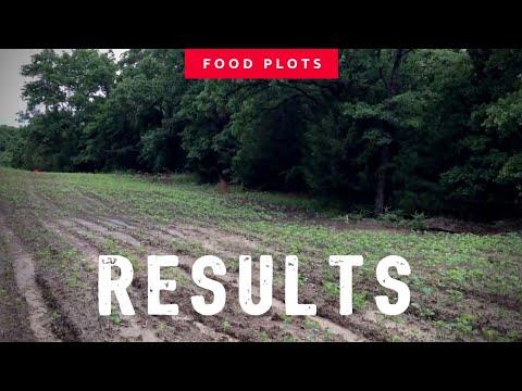Food Plots for Deer Hunting: Plot Saver Results