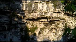 Cave of Swallows, Huasteca Country - Hundreds of birds flying away