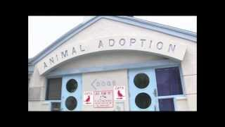 Open House Adoption Event - Citrus County Animal Services
