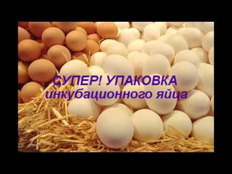 СУПЕР! Упаковка инкубационного яйца