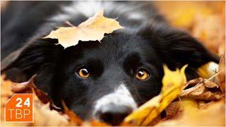 Вакцинация домашних животных от бешенства – бесплатно | Сергиево-Посадский городской округ