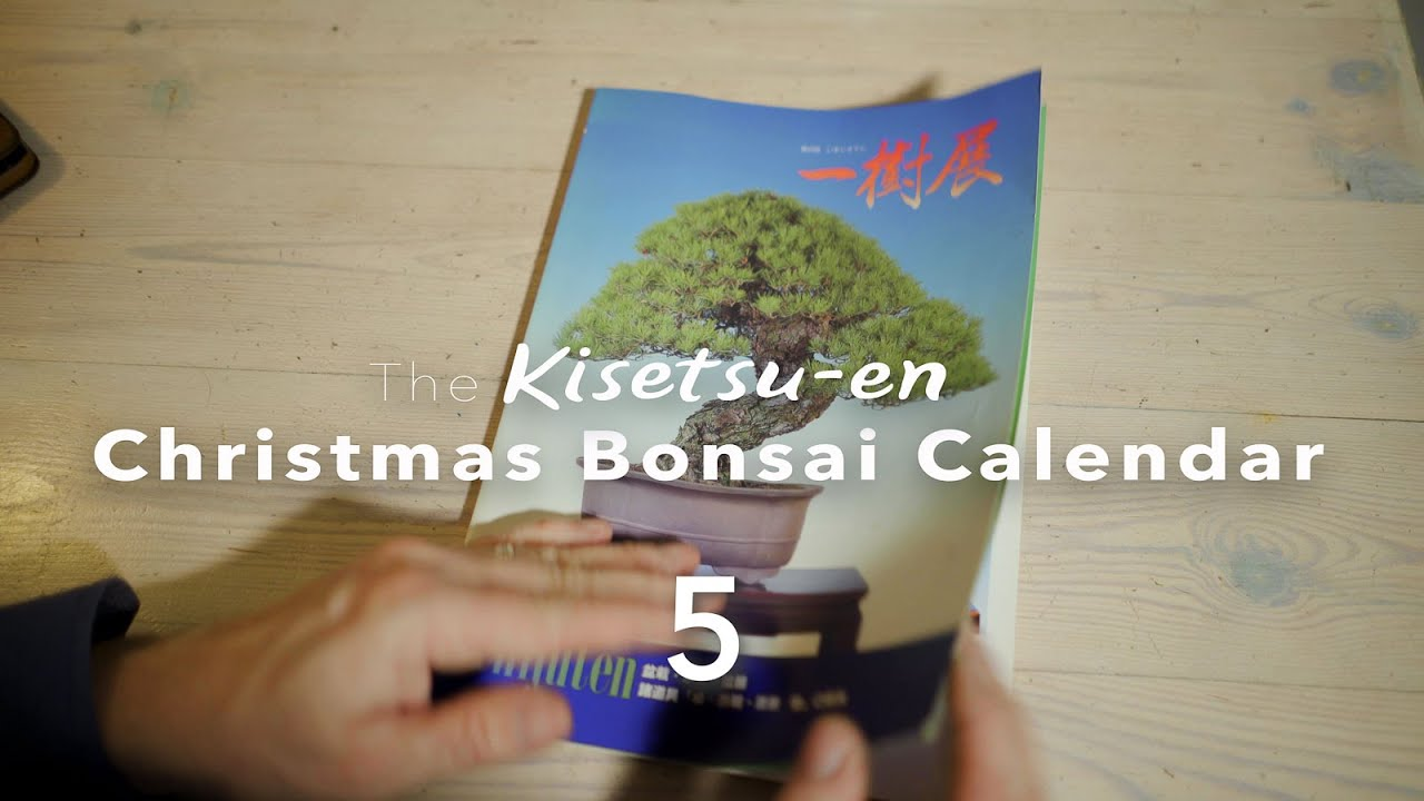 Bonsai Christmas Calendar Episode 5 Youtube