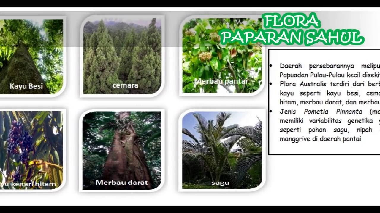 maxresdefault - Jenis Jenis Flora Dan Fauna