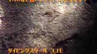 ダイビングスクールココモ( http://cocomo.jp )で楽しめる夜のアドベン...