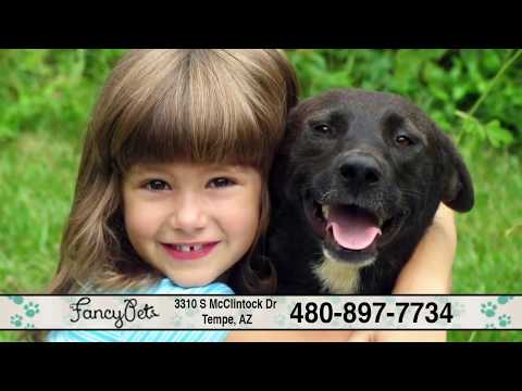 Fancy Pets Grooming | Teeth Brushing, Ear Cleaning, Styling, Flea & Tick Treatment | Tempe, AZ