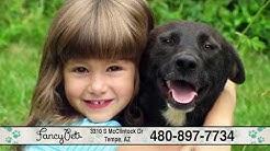 Fancy Pets Grooming   Teeth Brushing, Ear Cleaning, Styling, Flea & Tick Treatment   Tempe, AZ