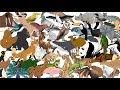 Animales del mundo para niños