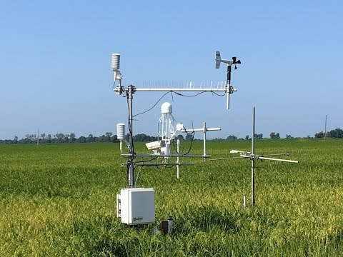 Improving Water Conservation on Rice Fields