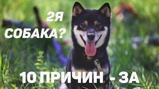 10 причин завести вторую собаку