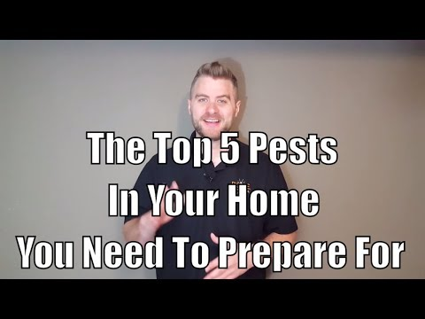 Top 5 Pests In Your Home You Need To Prepare For