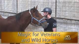 Horse Sense & Healing with Monty Roberts