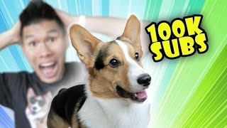 CORGI Gets HOW MANY SUBSCRIBERS?! MY REACTION - Life After College: Ep. 481