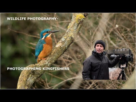 Photographing Kingfishers-  Wildlife Photography.