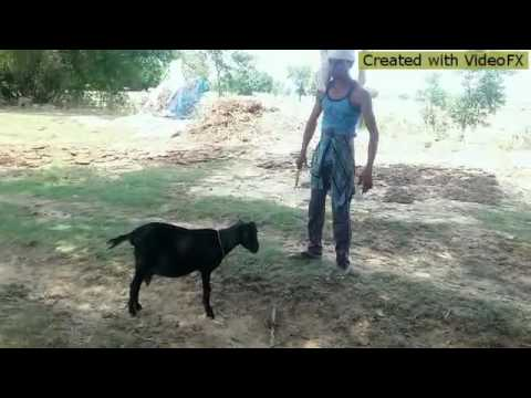 sunny deol jeet film very funny dialogue viral video